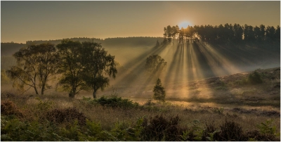 2 Autumn Mists Cannock Chase -16