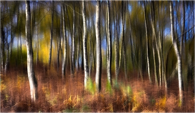 2 Autumn Birches