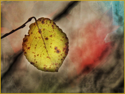 2 Last of the winter leaves