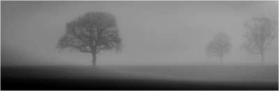 2 trees in the mist