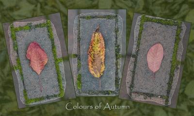 Colours of Autumn 1Score 49