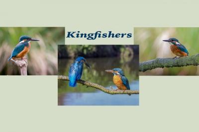Kingfishers 1Score 67