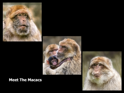 Meet The Macacs 1Score 64