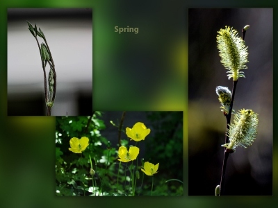 Spring 1Score 47