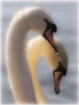 3 Two Swans