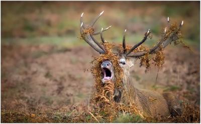 10 Red Deer