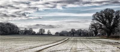 15 Frosty Morning