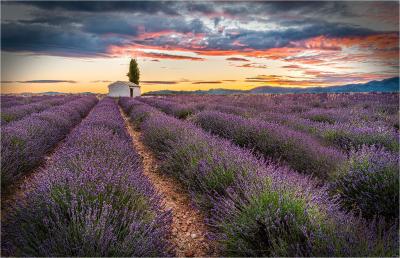1 Lavender field and hut sunrise
