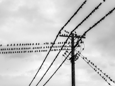 Birds on a Wire 40