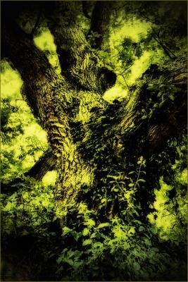 Trees 30