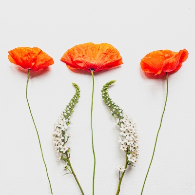 Poppies Gooseneck 39