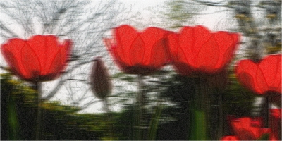 Poppies textured