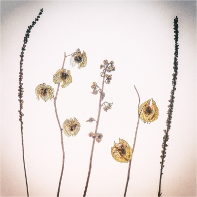 seed headS by Judi Dicks