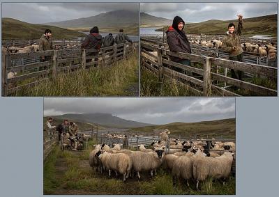Skye Shepherds -12