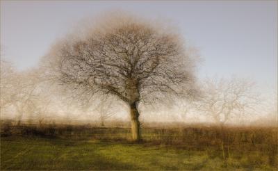 Winter Oak (12)