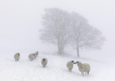 Snowy Pasture -12