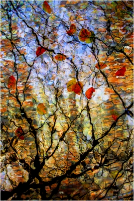 73 autumn reflections