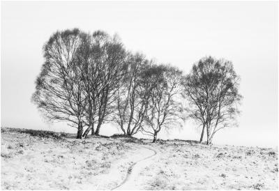 Sherbrook Trees