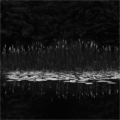 reedmace andl lilies
